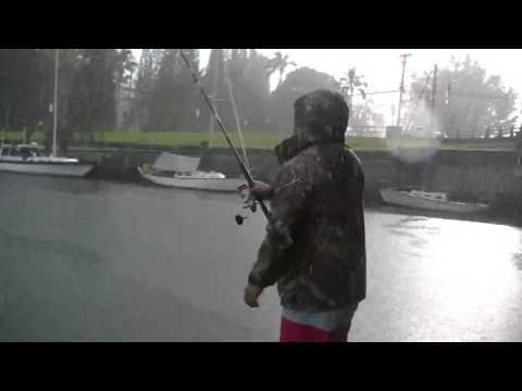 Hilo Awa Fishing
