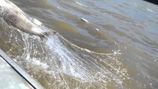 видео: рыбалка! ловим кету! ловля сплавом! вот так улов!