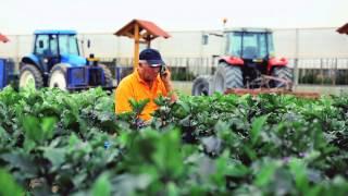 Produzione moderna di verdure e tradizione: Gli agricoltori di Ortosole – La loro storia  (IT)