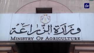 وزارة الزراعة تعلن القضاء على السرب الثاني من الجراد (7-5-2019)