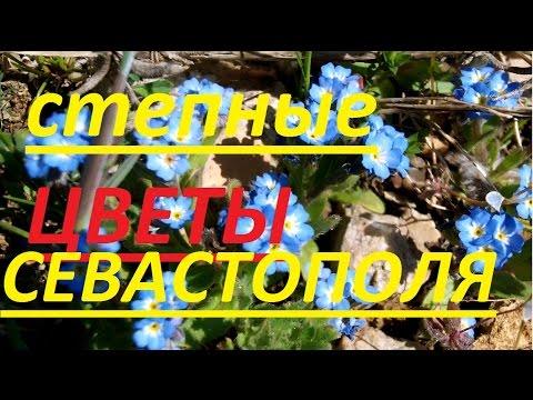 Степные цветы Севастополя / МАКРО Съёмка
