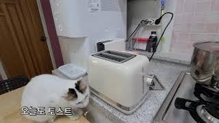 토스트기와 입춘 / 시간 계산이 안되는 고양이