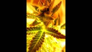 Bare ft. Proe - Indica Sativa [FREE MP3] HD