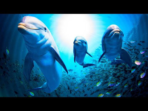 Relaxing Music for Stress Reliefg Music for Meditation, Soothing for Massage, Deep Sleep, Spa