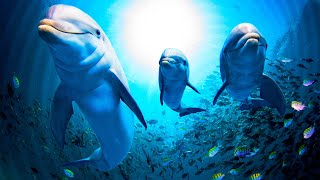 Relaxing Music for Stress Relief. Healing Music for Meditaion, Soothing for Massage, Deep Sleep, Spa(ASMR Stress Relief Relaxing Music with Underwater Binaural Nature Ocean Sounds