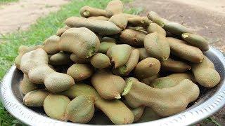 Awesome Village Green Tamarind Chutney Recipe | Yummy Sour Taste