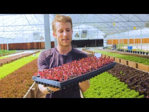 🐟 + 🌿 = LARGEST Aquaponics FARM in TEXAS 🤠