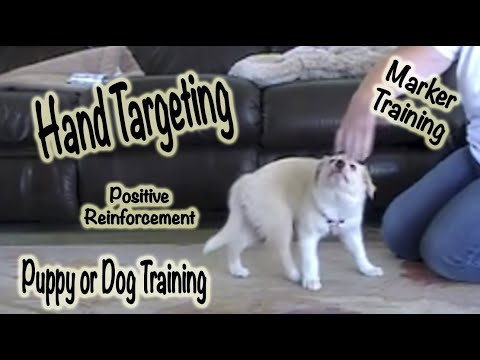 Hand Targeting - 1st training session