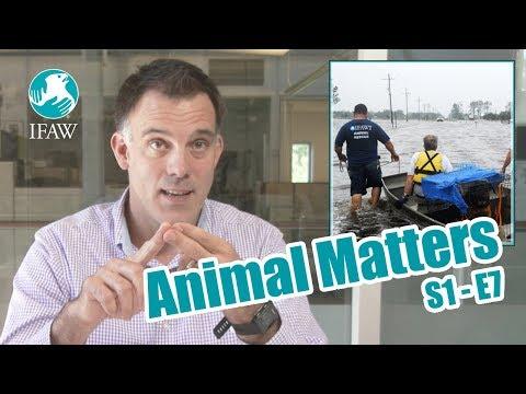 IFAW's Animal Matters