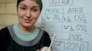 видео Выращивание чеснока как бизнес