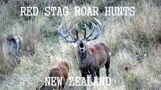 "New Zealand Hunting Red Stag Hunting ""The Roar"" Part 2 2013."