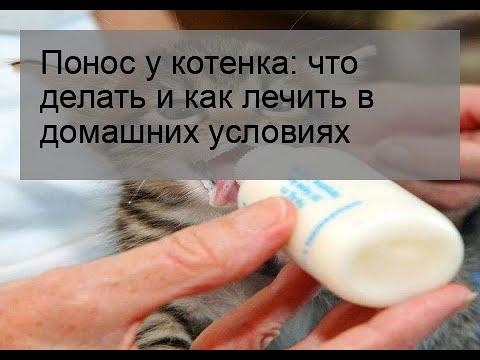 У котенка понос с кровью как лечить в домашних условиях