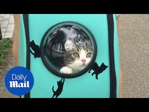 Cat excited to see the world from backpack window - Daily Mail