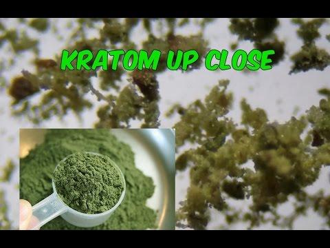 UNDER THE SCOPE: Kratom.
