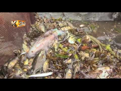 King of the waters : Man who confronts illegal fishermen in Msambweni
