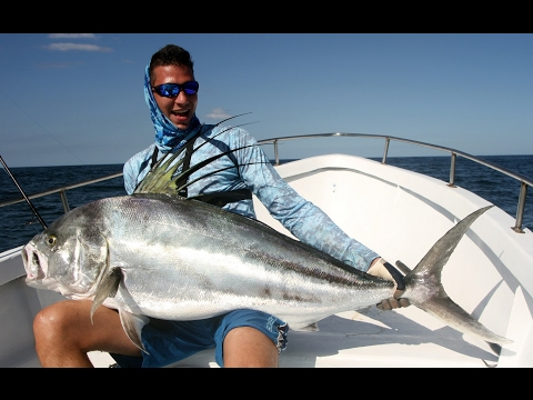 Catching Giant Roosterfish on Spinning Gear! Sport Fishing Costa Rica