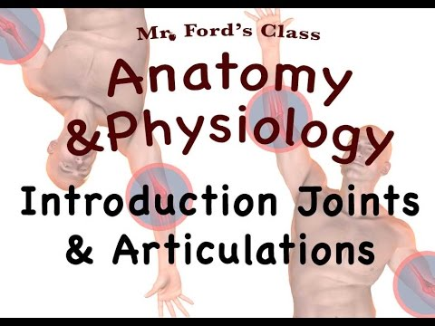 Joints and Articulations : Introduction to Joints and Articulations (08:01)