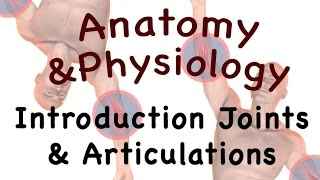 vuclip Joints and Articulations : Introduction to Joints and Articulations (08:01)