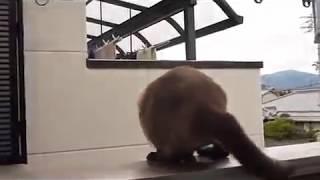 ROFLTV.RU Кот Супермен, летающий кот