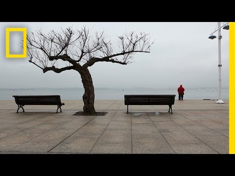 The Secret Lives of Trees | Short Film Showcase