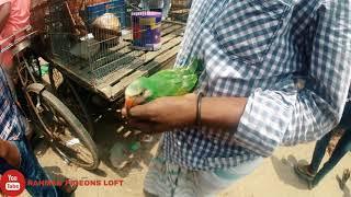 তোতা ও শালিক  পাখির বাচ্চা /মিরপুর ১ পাখির হাট