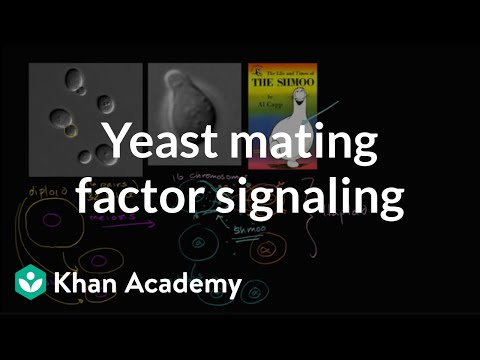 Cell Signaling In Yeast Reproduction