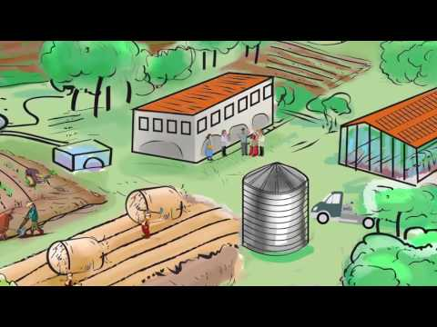 Improved rural urban linkages: Building sustainable food systems