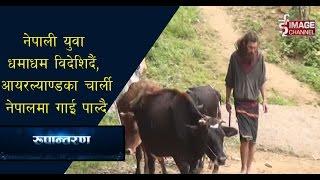 Rupantaran -आयरल्याण्डका चार्ली नेपालमा गाईपालन गर्दै\  Charlie in Nepal