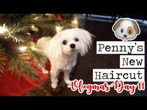 PENNY'S NEW HAIRCUT & GROCERY HAUL! || Vlogmas Day 11