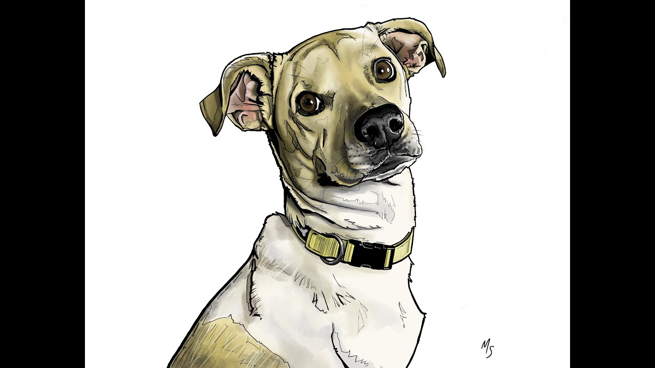 Procreate Tutorial How To Draw Realistic Animals Dobbernationloves