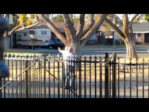 Fist Fight In South Sacramento On December 28 2013