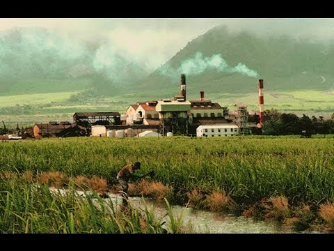 History of Hawaii & the Sugar Industry
