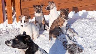 Благодарим всех за помощь приюту Дари добро Кошки и собаки ищут дом Новосибирск 2018  animal shelter