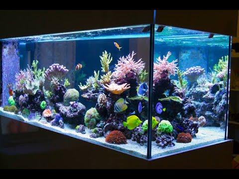 delightful-aquarium-in-home-design-l-fish-tank-l-in-door-home-aquarium-l-cool-ideas