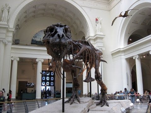 Field Museum of Natural History in Chicago, Illinois
