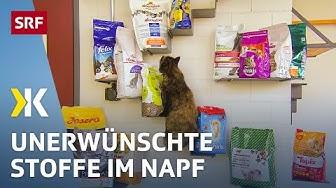 Katzenfutter im Test: Zuviel unerwünschte Stoffe im Katzennapf | 2018 | SRF Kassensturz