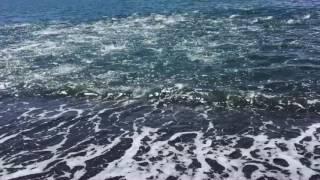 ショアブリ中、岸際で大量のナブラが発生。言わずもがなその後、ジグで...