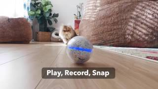 Pebby x Smushball: Interact with Your Pet Whenever, Wherever