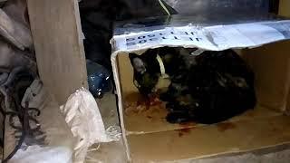 Слабонервным не смотреть! Кошка привела троих рыжих котят. 26.07.19. Чернигов.