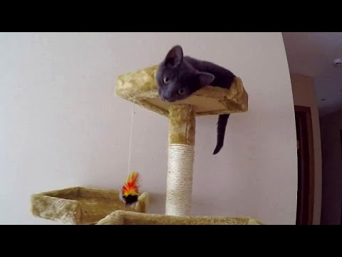 Funny Video Of Funny Cat Compilation