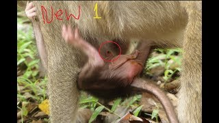 New 1, Welcome newborn monkey, It just born baby monkey