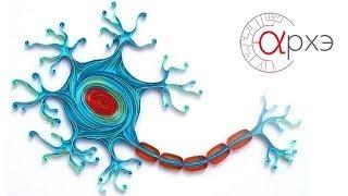 """Вячеслав Дубынин: """"Общее строение мозга; нервные клетки, вещества, составляющие нервные клетки"""""""