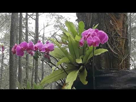 orchid-forest-cikole---lembang--bandung--west-java