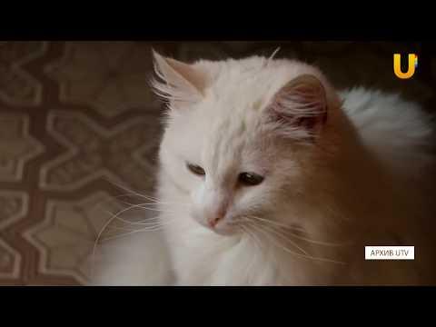 UTV. В Уфе обсудили проблемы бездомных животных
