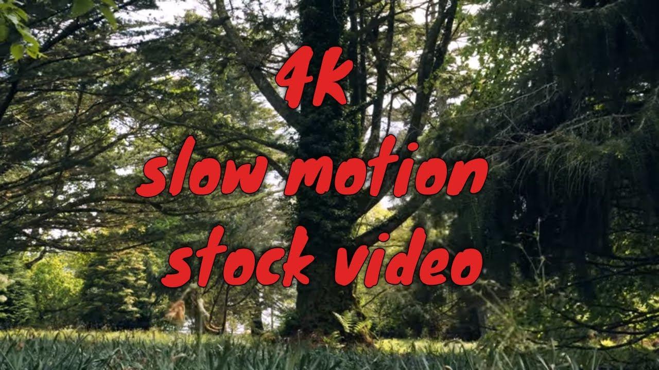 4K 50fps -  Trees - Forest - Grass #4K #trees #plant #scotland #50fps