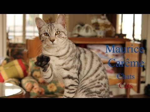 French Poems On Cats By Maurice Carême - Slow And Fast Reading