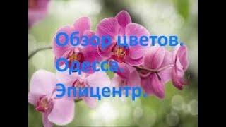 Одесса. Обзор цветов, Эпицентр .