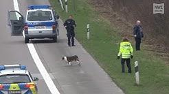 Hund auf A29 erschossen: Statement der Polizeiinspektion Oldenburg-Stadt/Ammerland