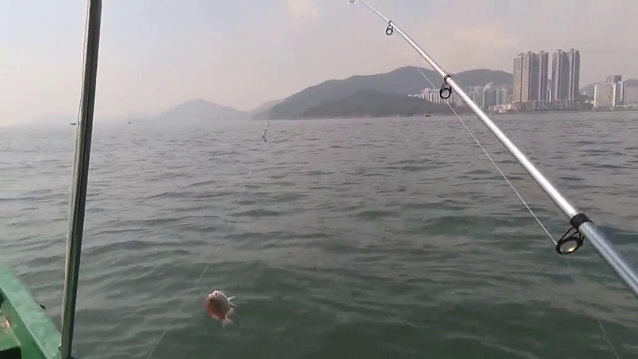 香港船釣:釣養海水魚(香港釣魚) - YouTube