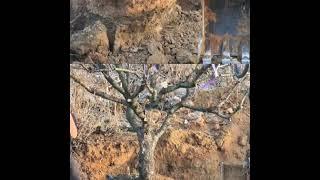 스카이조경 나무시장